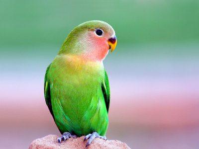 Venda de Papagaios
